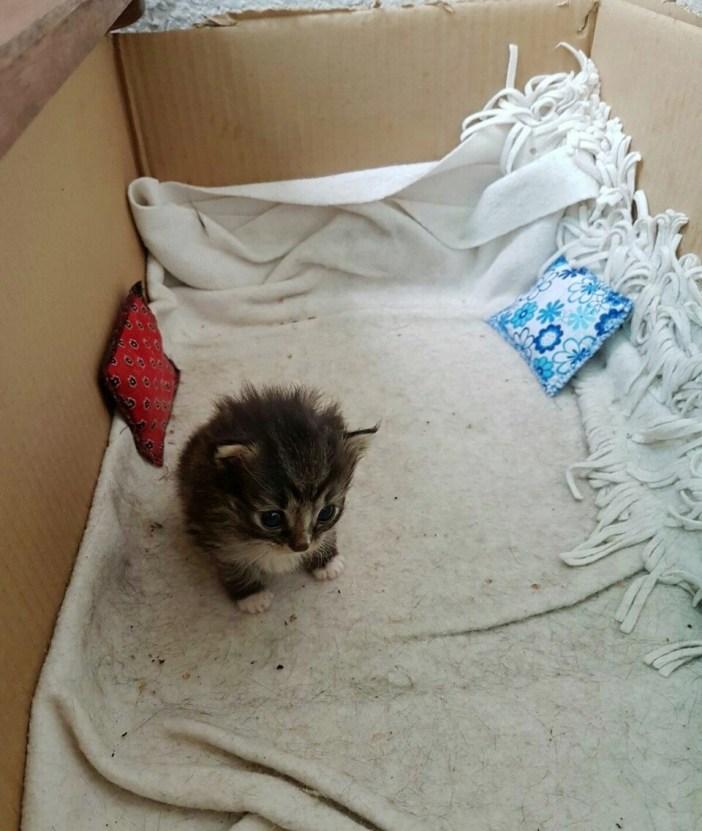 箱の中の子猫