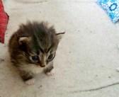 ある日、庭に来た野良猫を世話すると… 思いがけない幸せがやってきた! (6枚)