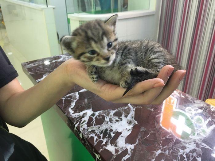 手の上の子猫