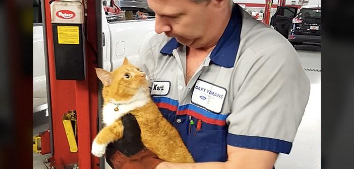 整備工場の猫