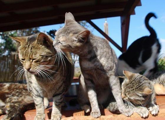 幸せそうな猫達