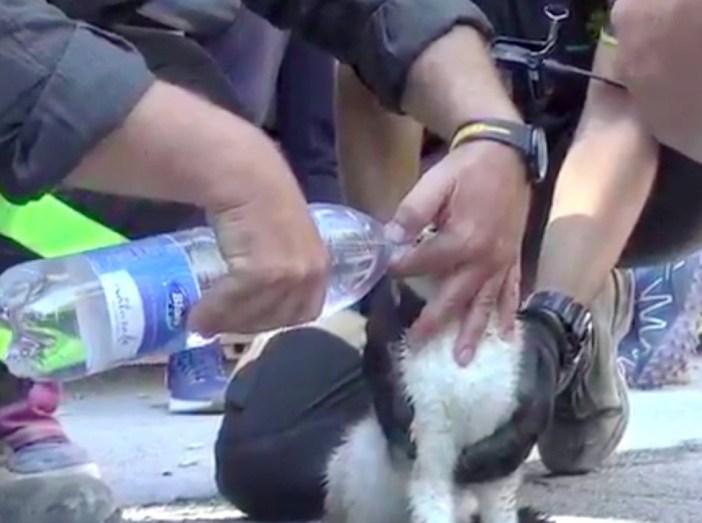 イタリア地震から救助された猫