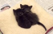 マリモのような子猫