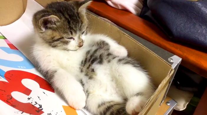 眠そうな子猫