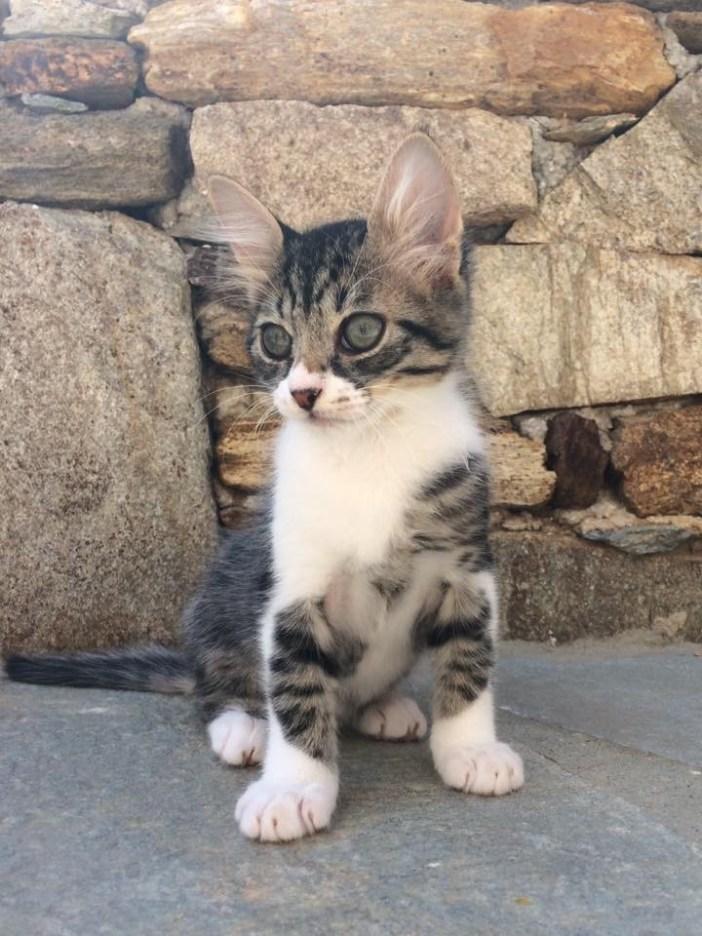 手足の大きな子猫