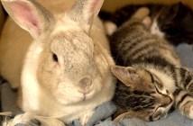 猫を育てるウサギ