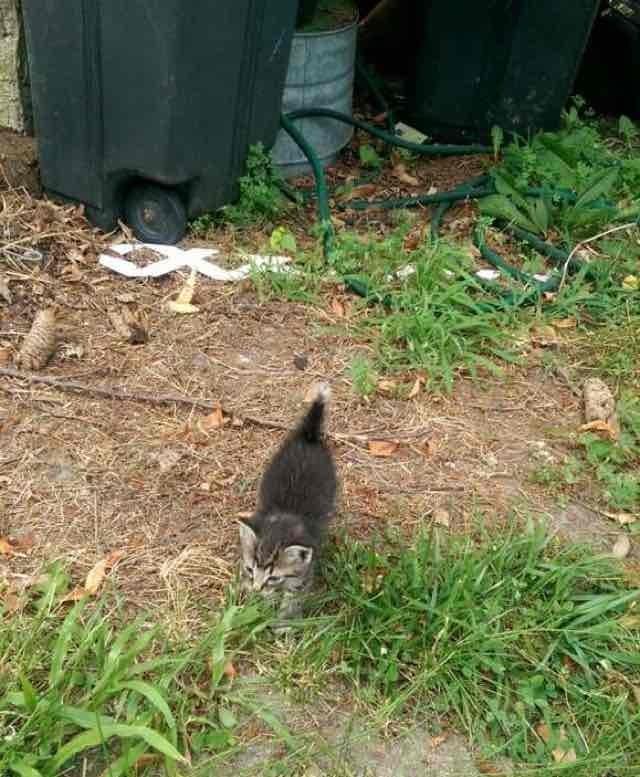 近づいてきた子猫