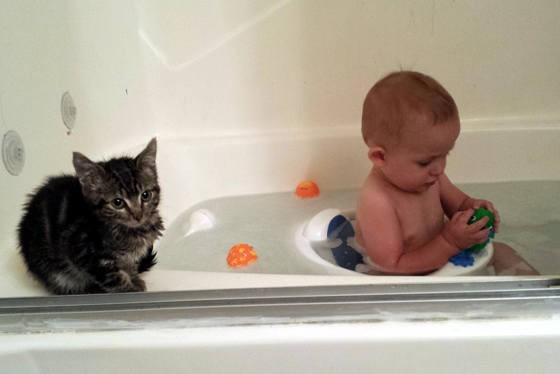 赤ちゃんといっしょにお風呂に入る子猫