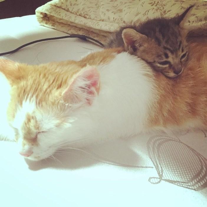 幸せのお昼寝猫