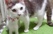 子猫を助ける先住猫