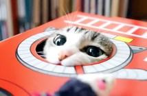 ハンティング猫