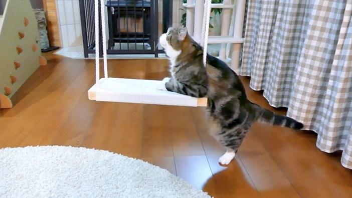 ブランコを見る猫