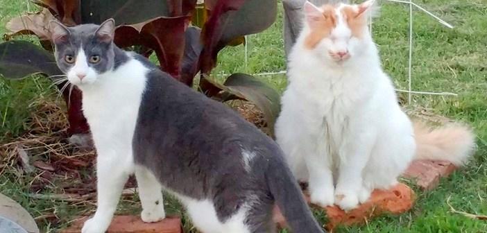 盲目の猫と友達