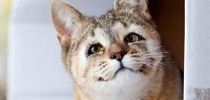 素敵な笑顔の猫