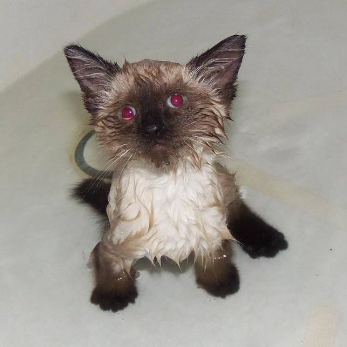 目の見えない子猫