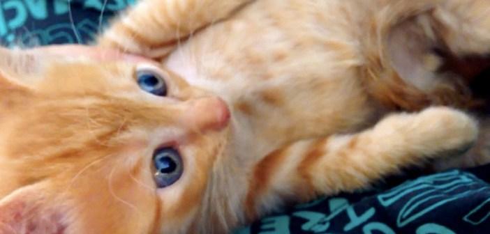 保護した子猫ビックリ