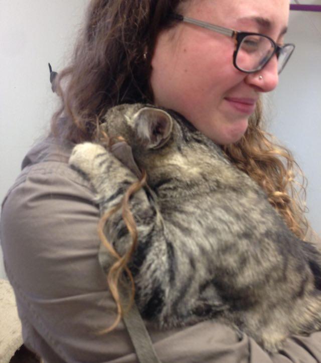 愛情いっぱいにハグする猫