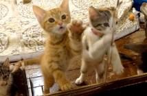 ガラスをカリカリする子猫