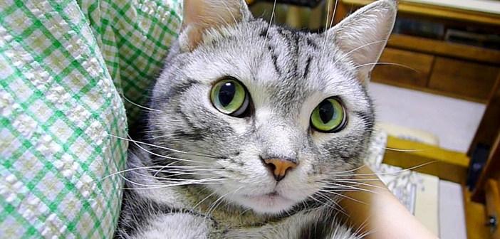 感情が顔に出過ぎな猫