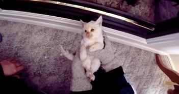 凍死寸前の子猫が復活