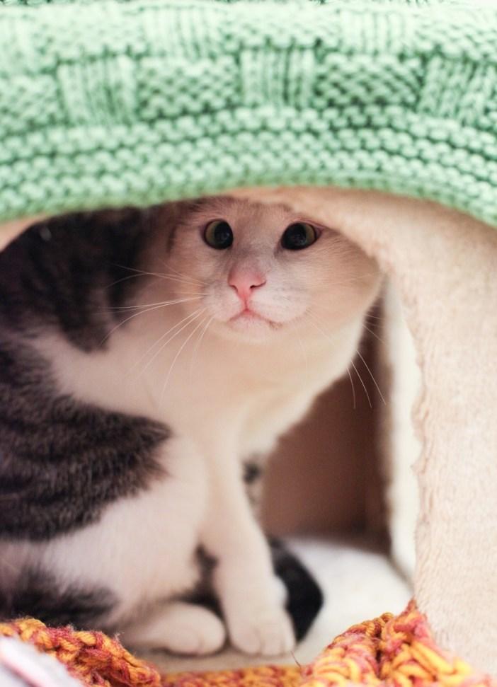 コッソリ覗く猫
