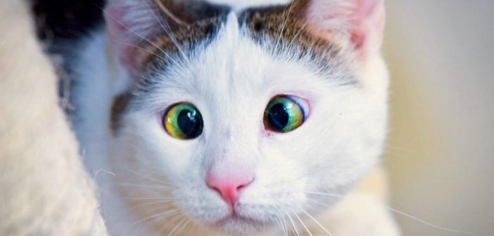 人間に慣れなかった猫