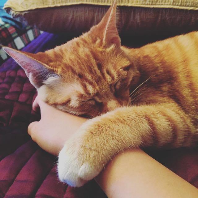 手が大好きな猫