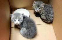 火事から救い出された子猫