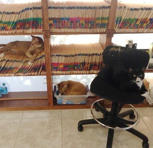 動物病院内でくつろぐ猫