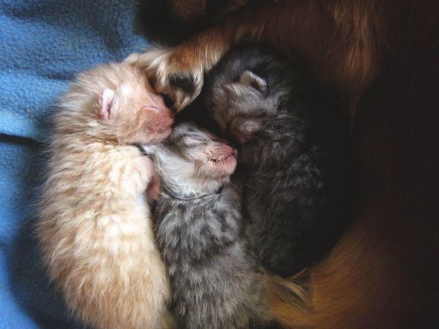 幸せそうな子猫達