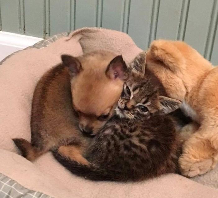 くっつく子猫と子犬