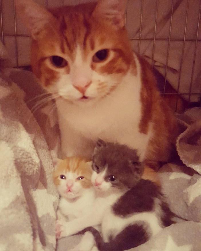 子猫を可愛がる父猫