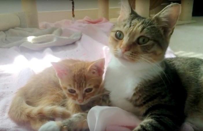 一緒の猫親子