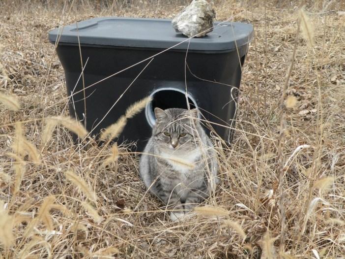 住処の前の猫
