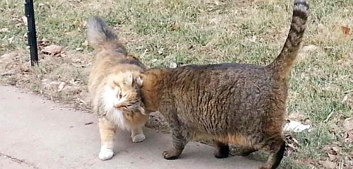 お友達の猫