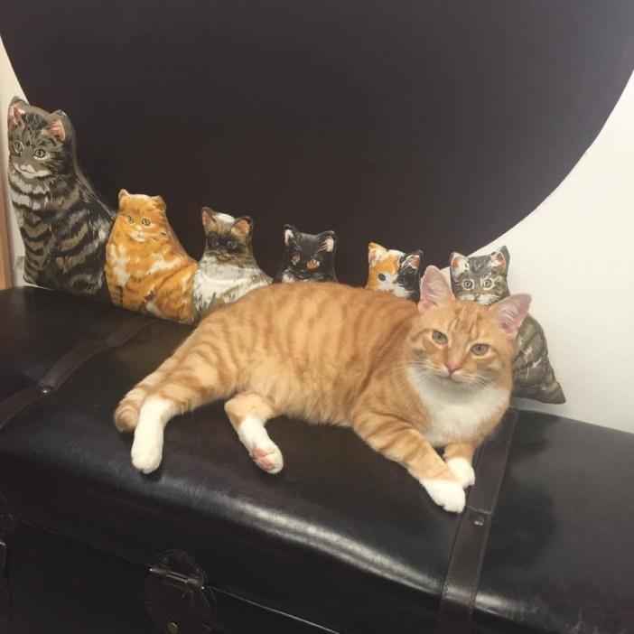 まったり中の猫