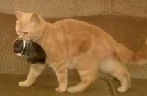 子ウサギと母猫
