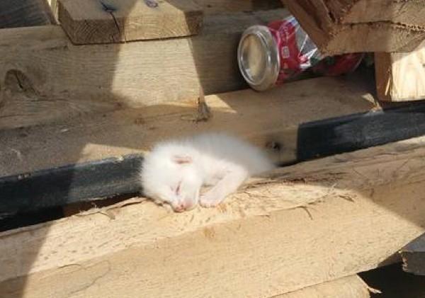 挟まってる子猫