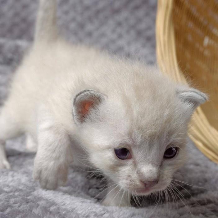 歩けるようになった子猫