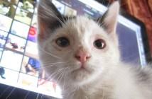 ニワトリ小屋の子猫