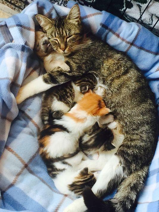 猫の家族と犬