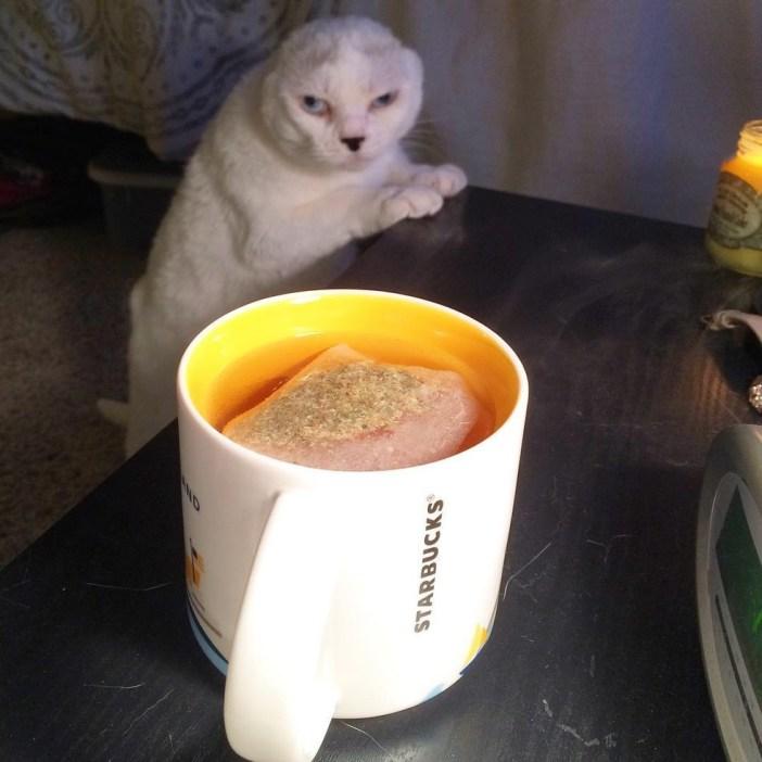 お茶を待つ猫