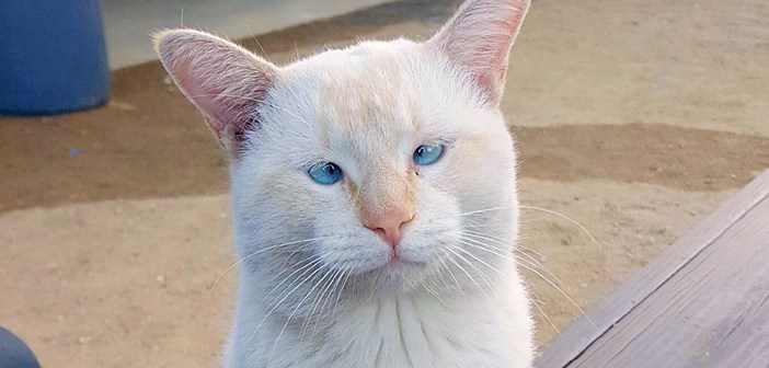 フードコートで発見された猫