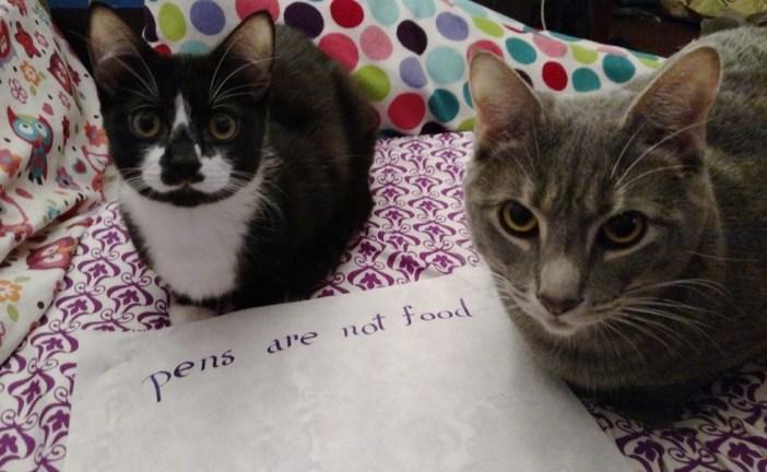 座る猫たち