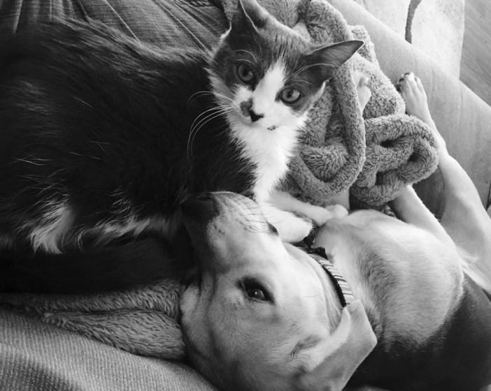 一緒の犬と猫