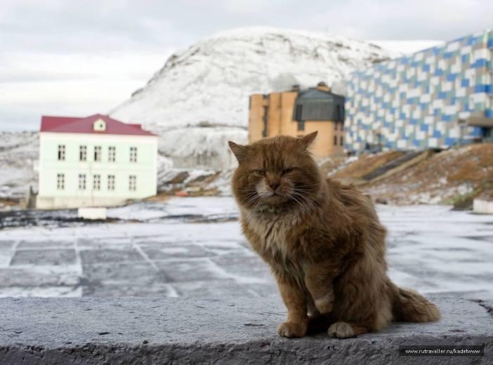 北極に住む猫