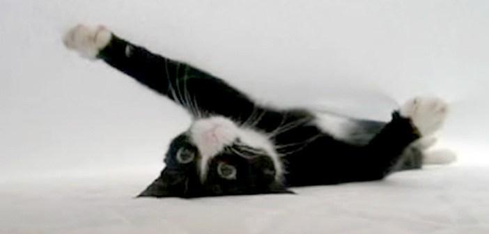 シーツの中の猫