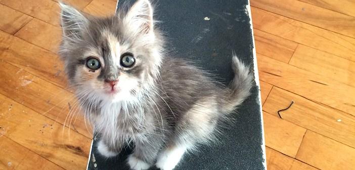 スケートボード子猫