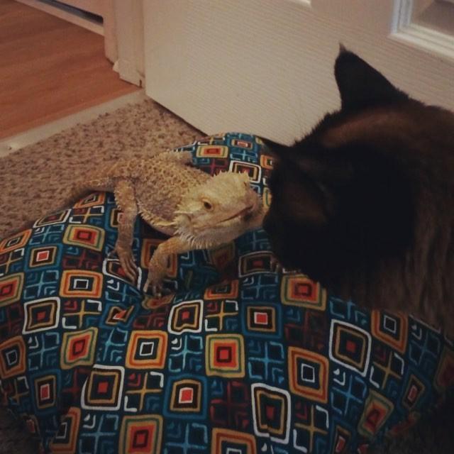 トカゲと猫はいつも一緒