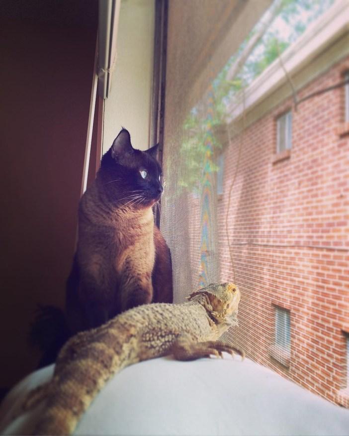 窓の外を見つめるトカゲと猫